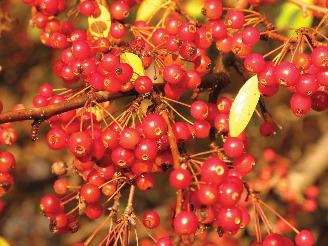 brightberries